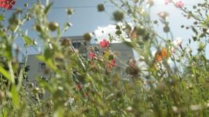 """Blühflächen in der Stadt werden immer seltener oder Opfer einer viel zu radikalen """"Pflegekultur"""""""